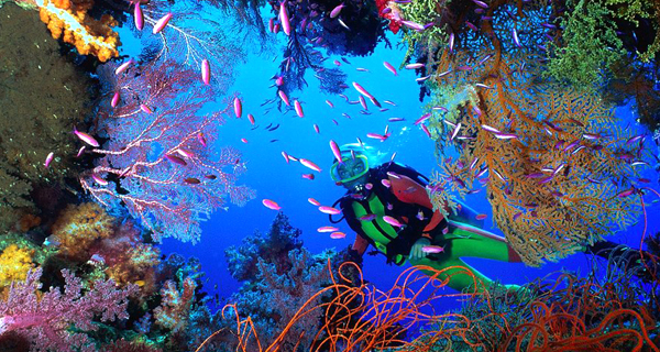 Playa Uva Two Tank Discover Scuba Dive